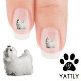 Maltese Princess - Nail Art Decals (Now! 50% more FREE)