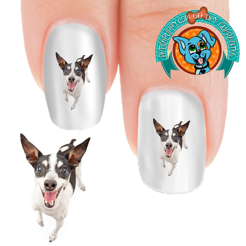 Rat Terrier Happy Nail Art (NOW 50% MORE FREE)