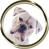 White Boxer Portrait Nail Art ( NOW 50% MORE FREE)