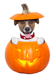 Jack Russell Jack-O-Lantern Nail Art Decals (NOW 50% MORE FREE)
