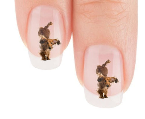 Dachshund Ooo My Treat Dachshund Nail Art Decals (NOW 50% MORE FREE)