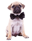 Pug Black Tie Affair - Nail Art Decals (Now! 50% more FREE)
