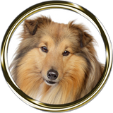 Shetland Sheepdog Portrait Nail Art (NOW 50% MORE FREE)