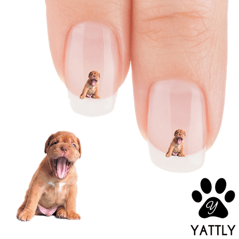 Boxer I am Sleepy Mama! Nail Art Decals (NOW 50% MORE FREE)