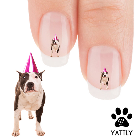 Pit Bull The BirthDay Boy! Nail Art Decals (NOW 50% MORE FREE)