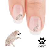 Golden Retriever Wanna Shake Nail Art Decals ( NOW 50% MORE FREE)