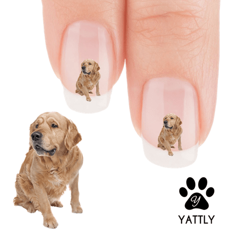 Golden Retriever Who is that Nail Art Decals (NOW 50% MORE FREE)