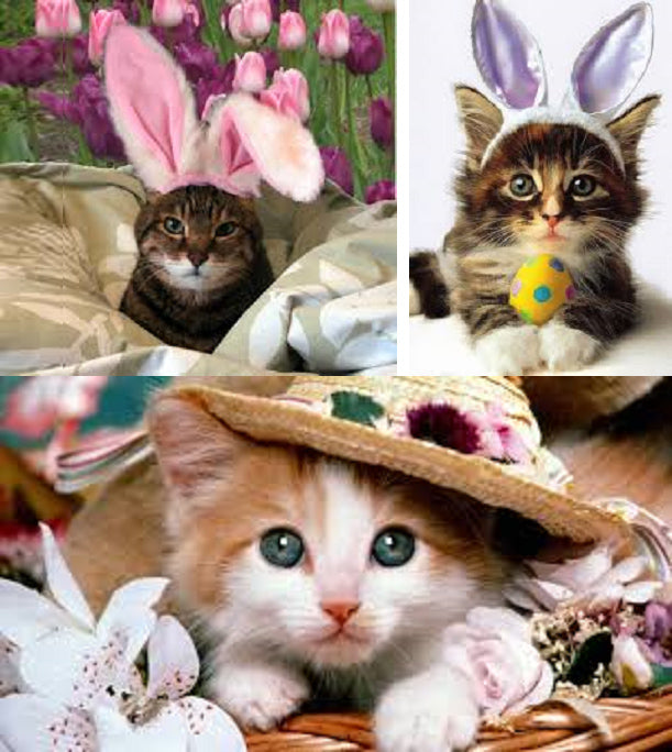 Easter Kitty Photo