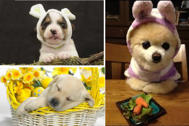 Easter Puppies Photo