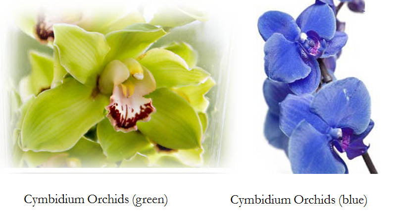 Green and Blue Orchids