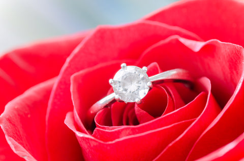 Engagement ring on red rose