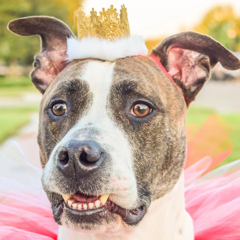 Red & White Gold Crown Headband For Pets - Hold It!