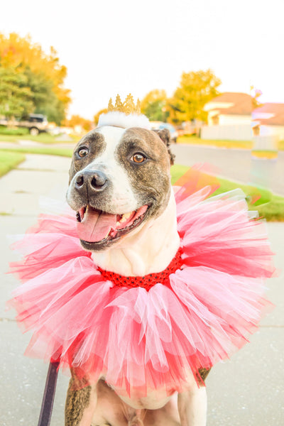 Red & White Dog Collar Tutu & Gold Crown Headband - Hold It!