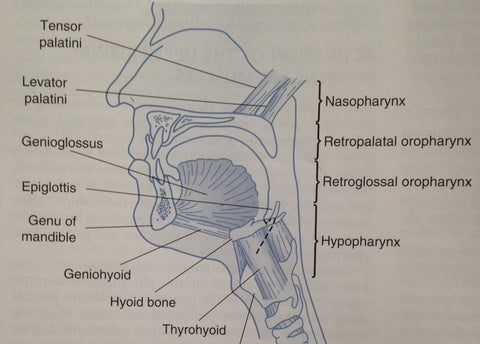sleep apnea areas of blockage