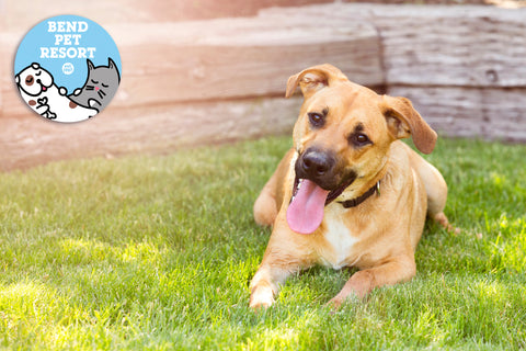 bend pet resort encourages traveling with your dogs in Oregon - doggy daycare or boarding services while you play