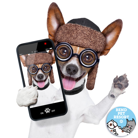 smiling funny dog taking an iphone selfie at Bend Pet Resort doggy daycare in Oregon