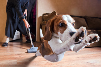 Drop off your dog at Bend Pet Resort for doggy daycare and vaccum in peace