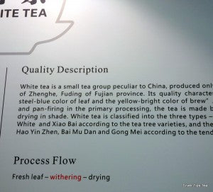 White tea at the Hunan Tea Museum