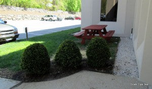 Shrubs and picnic table