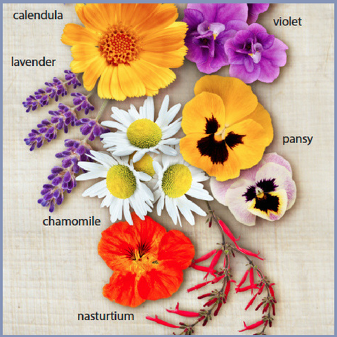 Edible Flower Chart - Silver Tips Tea Blog