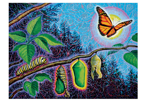 Metamorphosis - Notecard