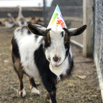 Tiny Party Goats