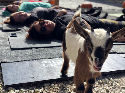 Goat Yoga at the Tiny Goat Lot