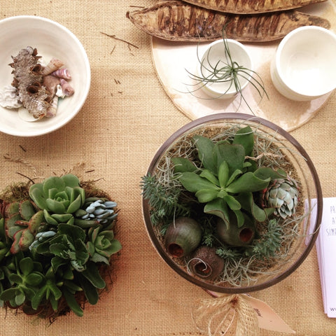Terrariums & Succuluents