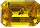 Natural Extra Fine Golden Yellow Amber with Insect - Emerald Cut - Poland - AAA+ Grade