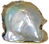 Natural Extra Fine Blue-Gray Japanese Akoya Saltwater Pearl - Round - Half-Drilled - Japan - AAA+ Grade