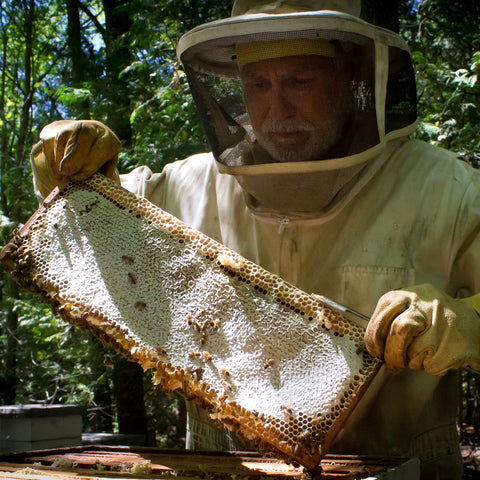 Beekeeper holding honeycomb frame from beehive