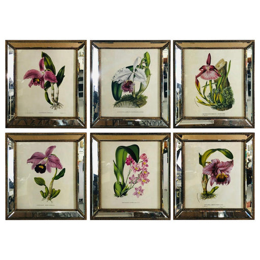 Botanicals of Cattleya Orchids in a Mirrored Custom Frame, Set of 6