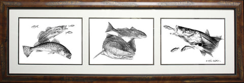 Framed Pencil Coastal 3-in-1 Slam: Sea Trout, Redfish, Snook
