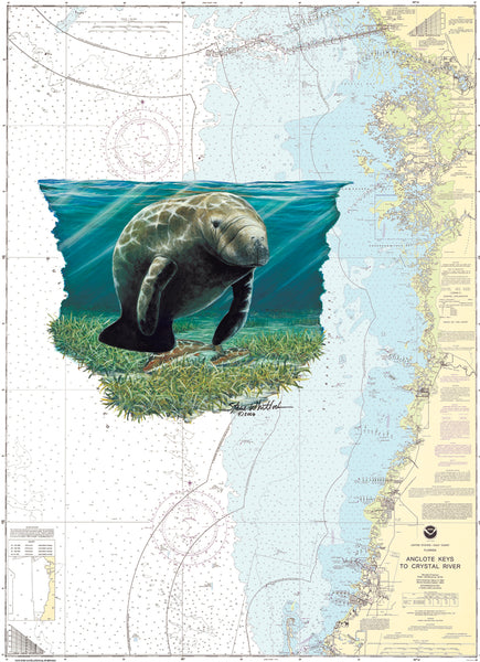 SALE Chart Art - Crystal River Manatee