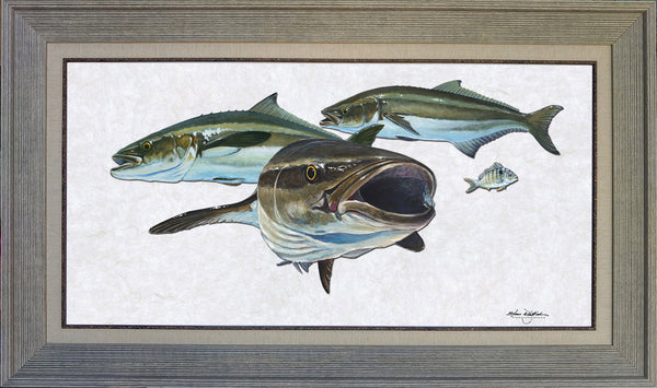 Acrylic Illustration - Cobia