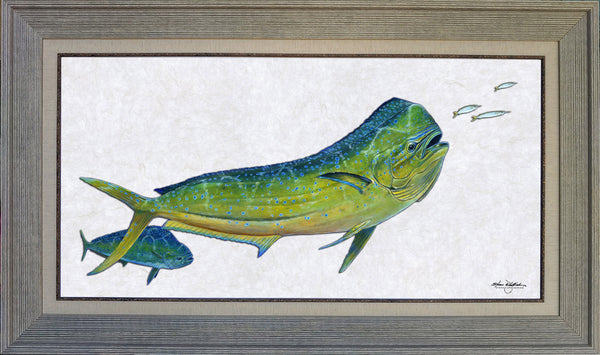Acrylic Illustration - Bull Dolphin Fish