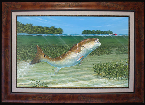 Fine Art - Bokellia Redfish