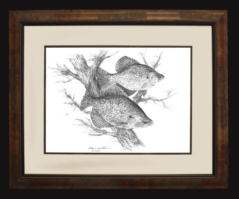 Black Crappie Pencil Art