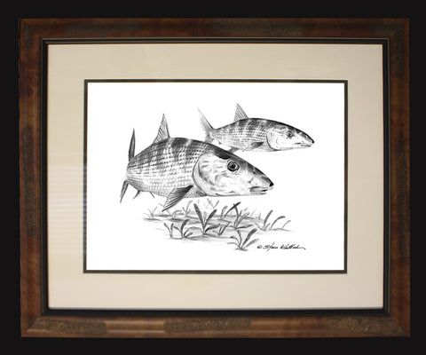 Pencil Art - Bonefish