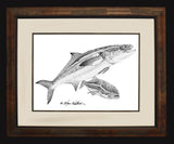 Pencil Art - Cobia
