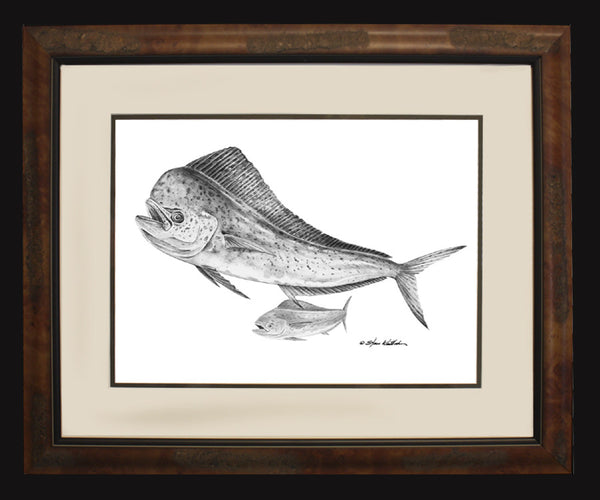 Pencil Art - Dolphin-Mahi