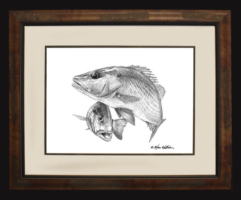 Pencil Art - Gray Snapper