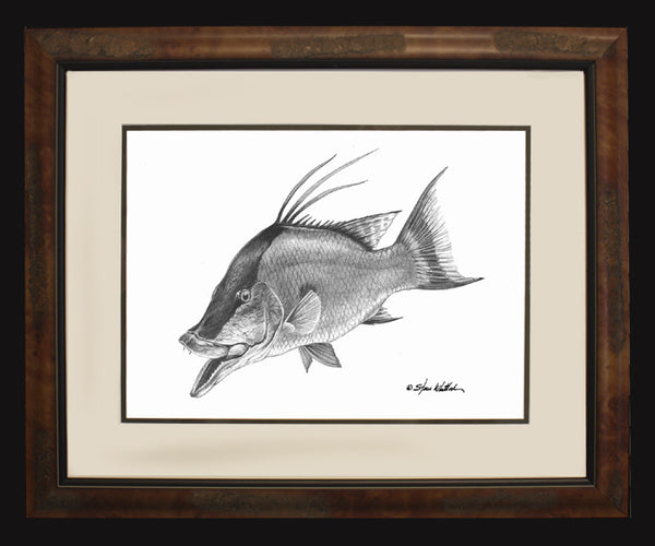 Pencil Art - Hogfish