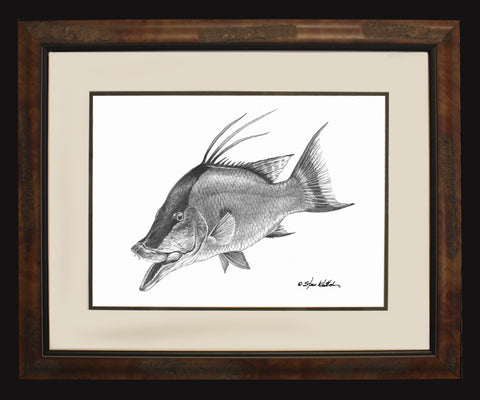 Pencil Art - Hogfish (BF O/E Only)