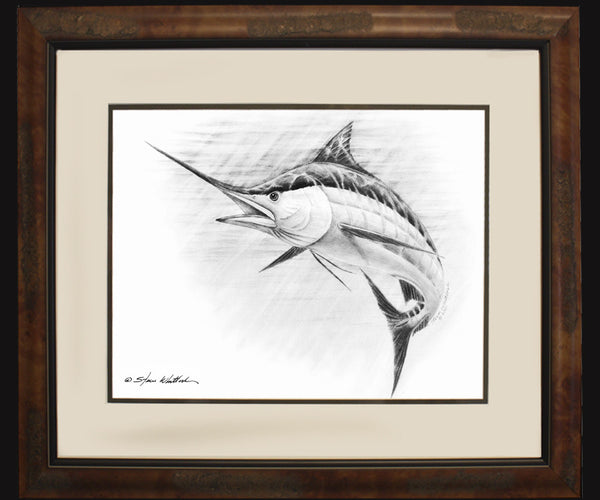 Pencil Art - Blue Marlin