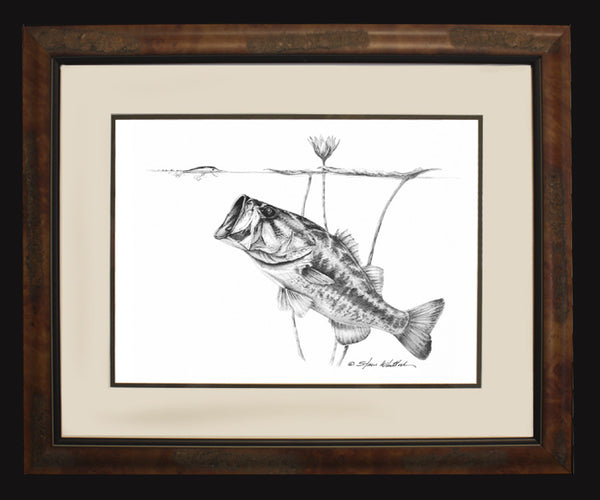 Pencil Art - Under the Lillies (Largemouth Bass)