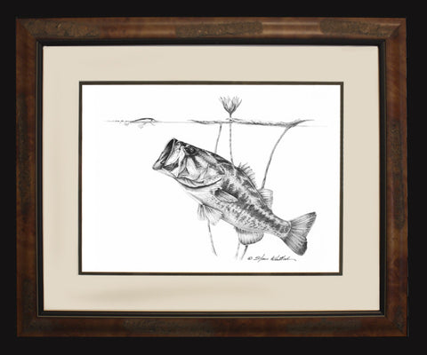 Pencil Art - Under the Lillies - Largemouth Bass (BF O/E Only)