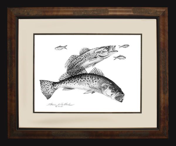 Pencil Art - Spotted Seatrout