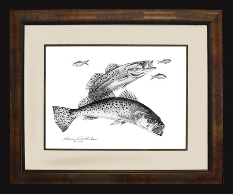 Pencil Art - Spotted Sea Trout (BF O/E Only)