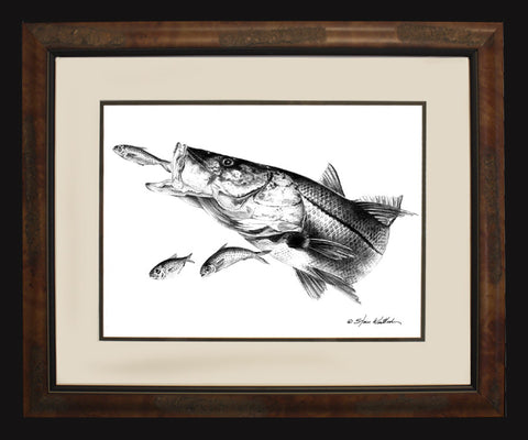 Pencil Art - Snook